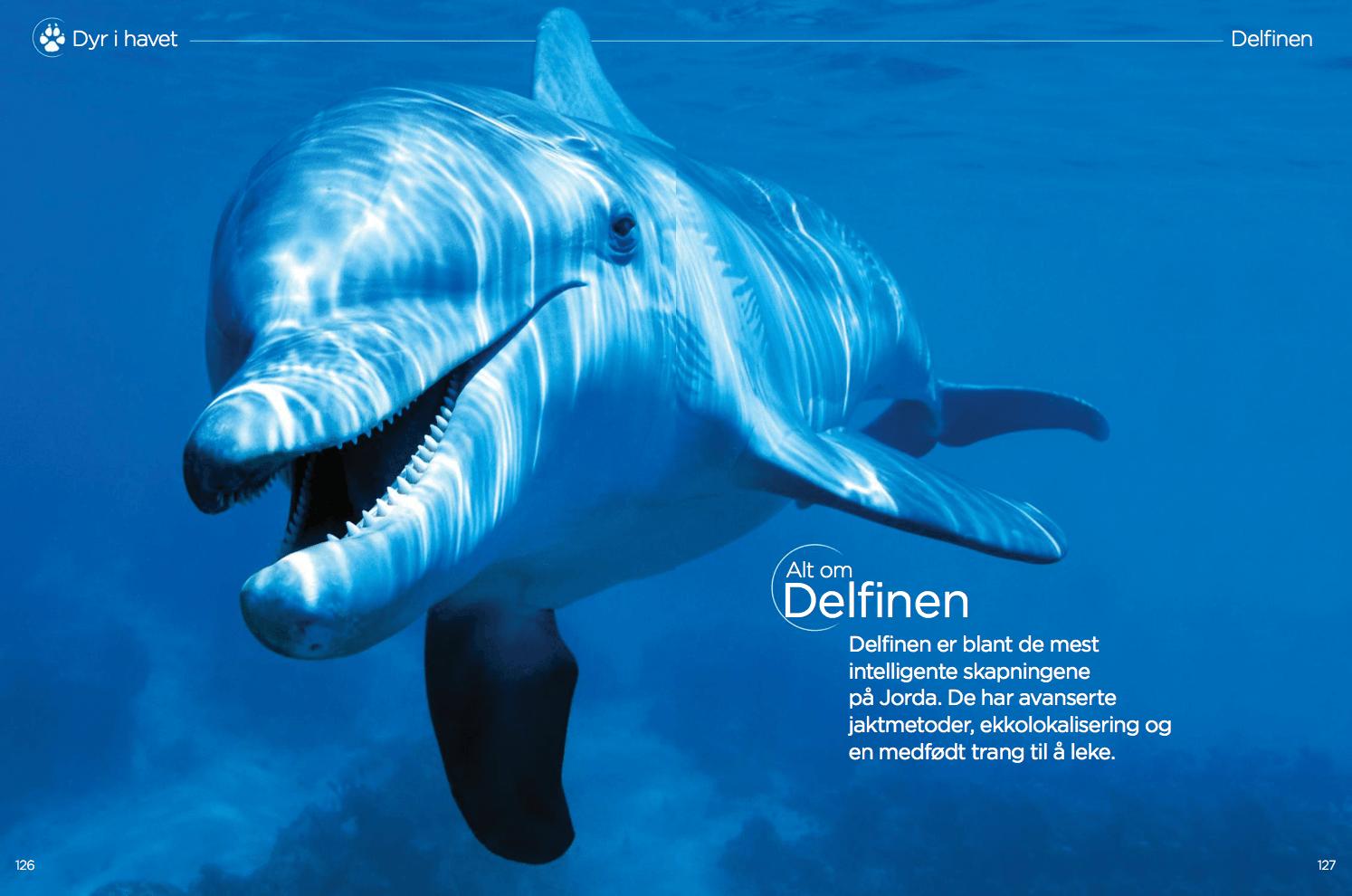 Alt om delfinen, oppslag