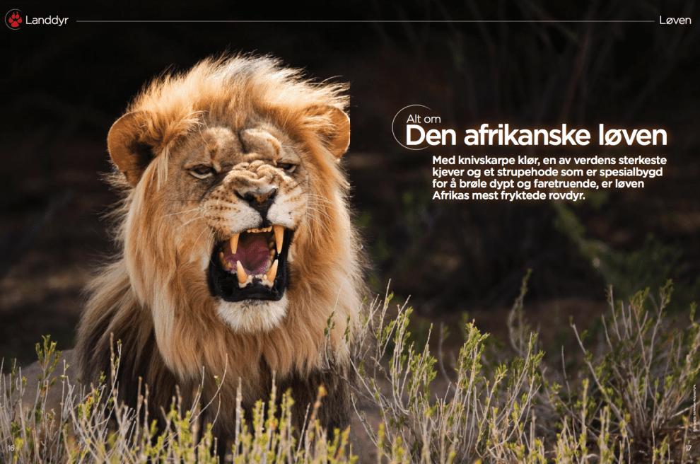 Alt om den afrikanske løven, oppslag