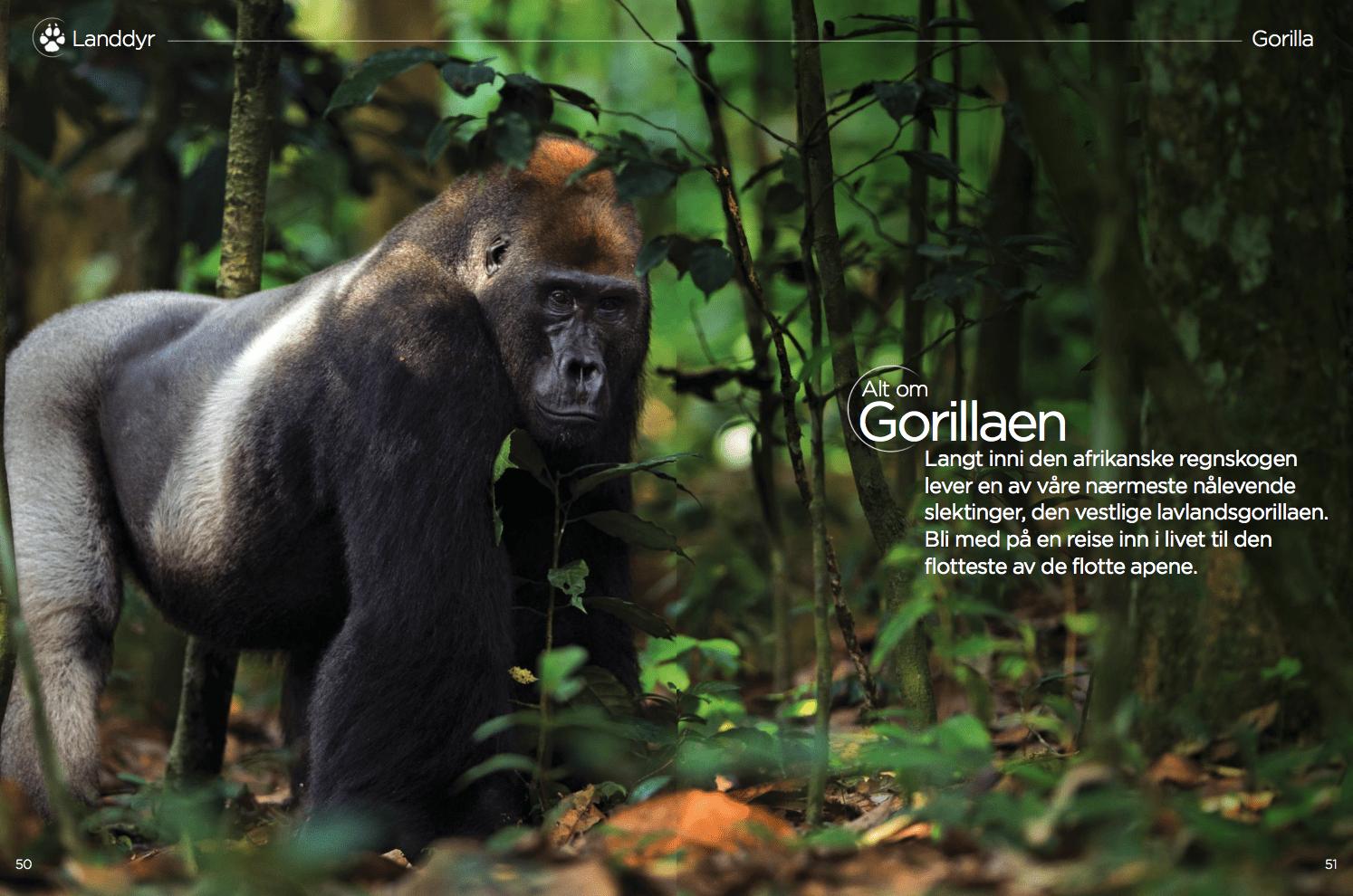 Alt om Gorillaen, oppslag
