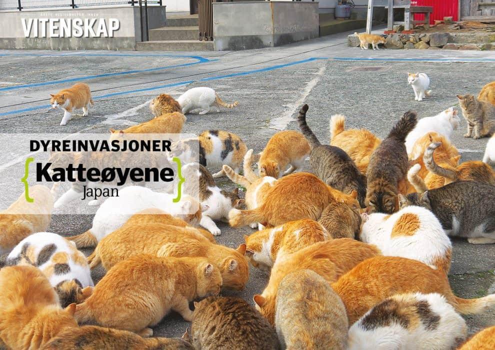 Dyreinvasjoner: Katteøyene